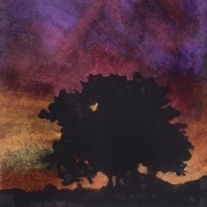 Tree at Sunset – 20K4136